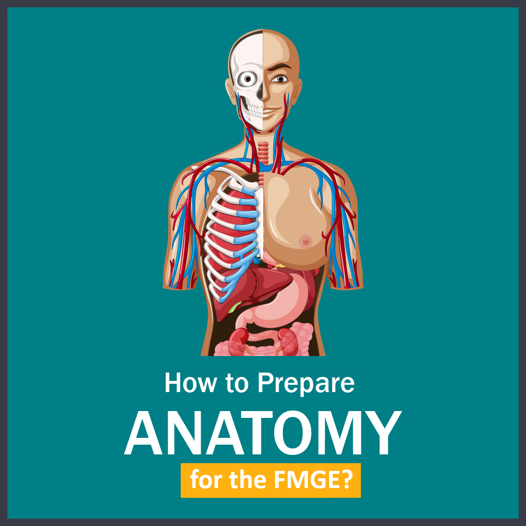 How to Prepare Anatomy for the FMGE 01 1 LMR for FMGE August-2020: Anatomy
