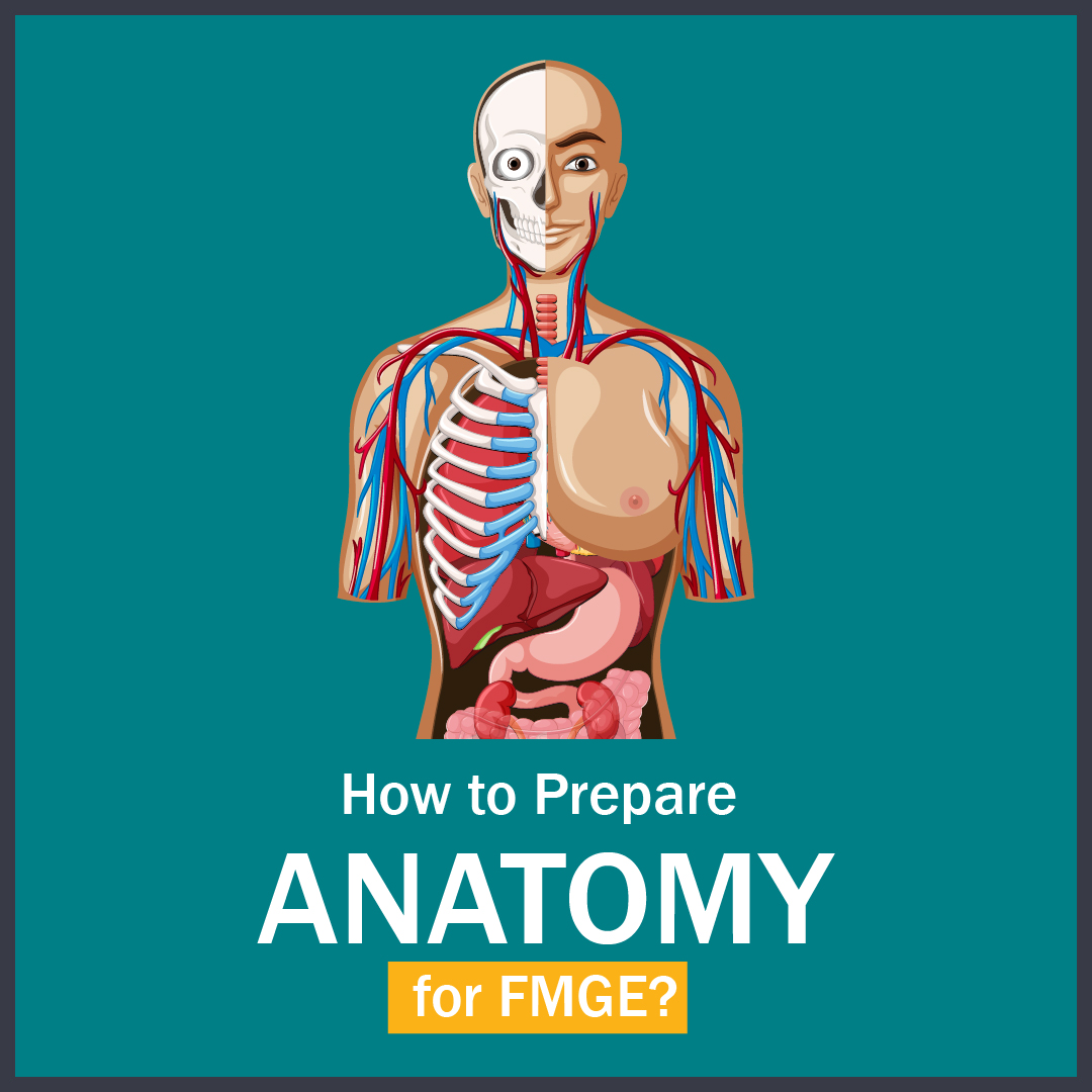 How to Prepare Anatomy for FMGE?